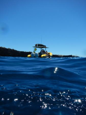 Ultimate Whale Watch & Snorkel: Our boat...more like an ocean raft.