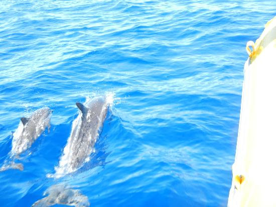 Ultimate Whale Watch & Snorkel: Mother and baby dolphin swimming right next to our boat!