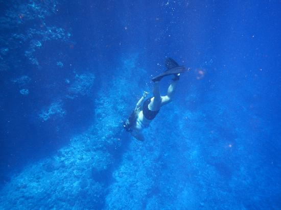 Ultimate Whale Watch & Snorkel: One of our crew members free diving to point out an eel