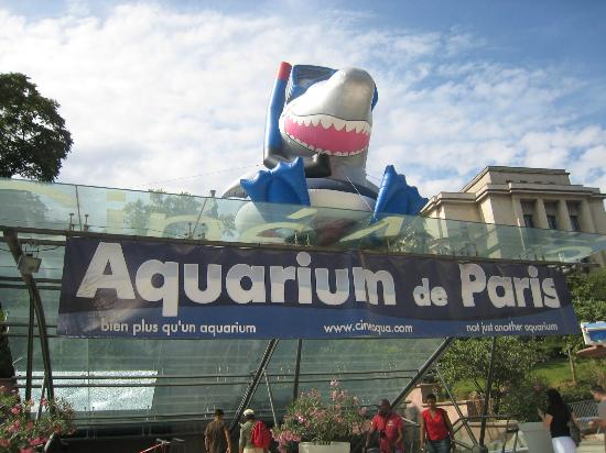aquarium de paris trocad ro photo de aquarium de paris cineaqua paris tripadvisor. Black Bedroom Furniture Sets. Home Design Ideas