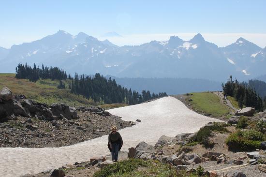skyline trail to glacier view looking back at tatoosh range and mt rh tripadvisor com