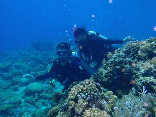 Bunaken Island Resort: diving at Bunaken
