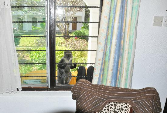Diani Sea Lodge : Besucher