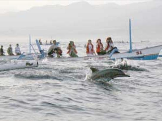 Lovina Beach, Endonezya: ikan lumba-lumba