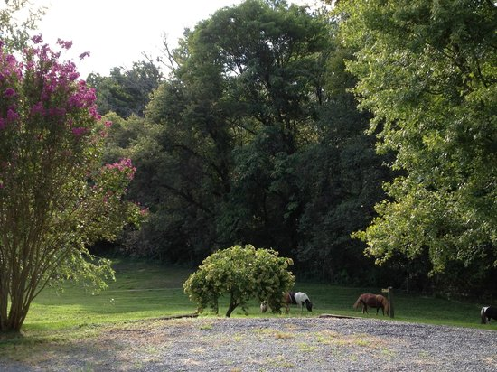 Fairhill Farm: Step off the front porch and see the 4 mini-ponies grazing