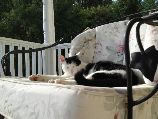 Fairhill Farm: Big Boss cat curled up on a chair with us on the front porch