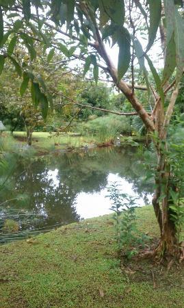 Hotel El Silencio del Campo: grounds