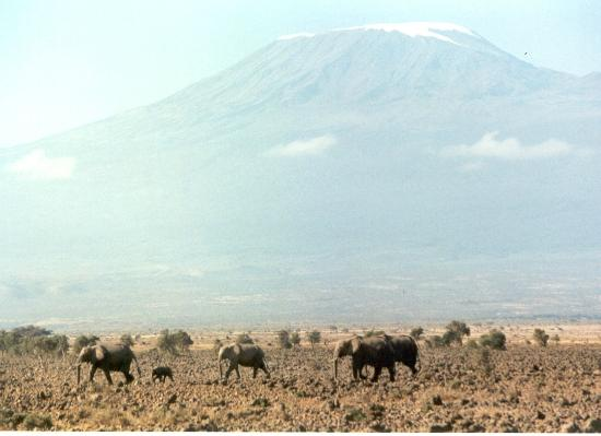 Kenya Real Tours & Safaris - Day Tours