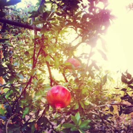 La Colombara: Garden