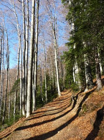 Medvednica mountain (Sljeme): Medvednica