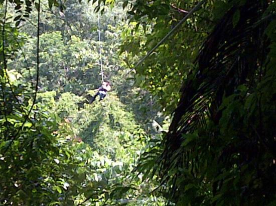 Paraiso Rainforest and Beach Hotel: cable del canopy