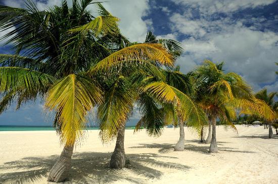 Isla Pasion: Palms