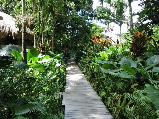 MAIA Luxury Resort & Spa: walkway to the spa and garden