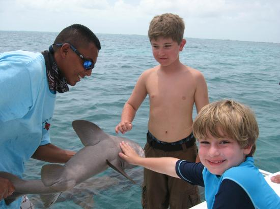 ‪‪Grand Caribe Belize Resort and Condominiums‬: shark ray alley with Dingo