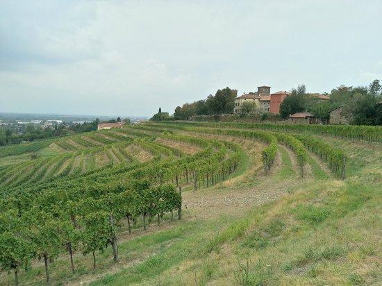 Locanda al Castello di Buttrio: landscape surrounding the castello
