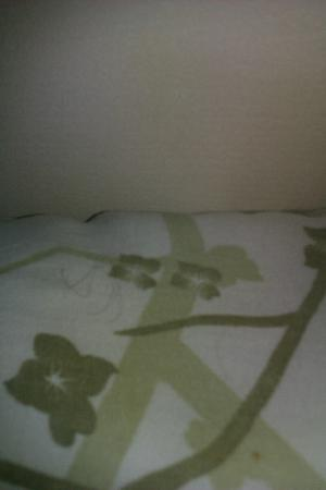 The Light House B & B: Pillow