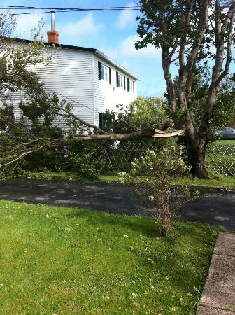 Comfort Inn Airport: Down tree across from hotel