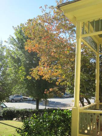 Carrier Houses Bed and Breakfast: Beautiful Maple tree outside the Norris room