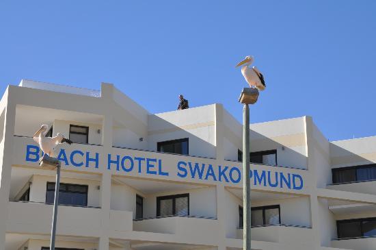 Beach Hotel Swakopmund Pelican In Front Of The