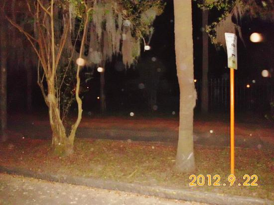 Hearse Ghost Tours: Orbs