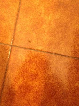 Colombo: Small roach on floor