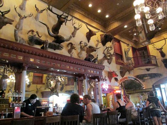 Mounts Over Bar In The Saloon Picture Of The Buckhorn