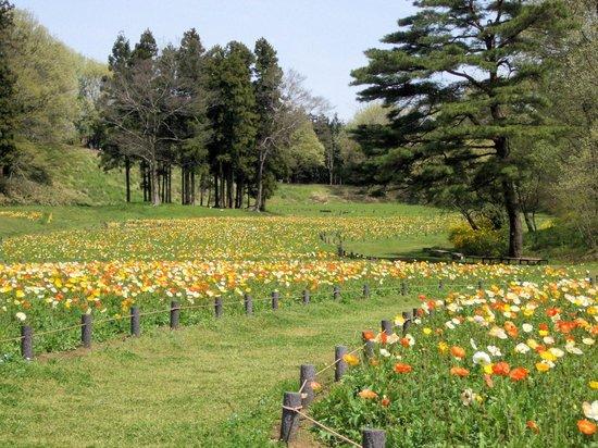 Namegawa-machi, Japan: 公園内の「運動公園」の北側のお花畑です。春はとくにかわいい草花が一面に咲きます。