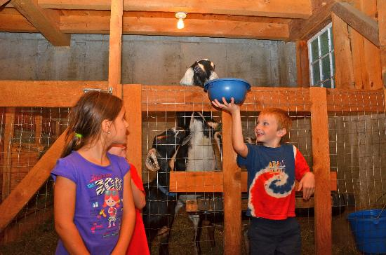 Cold Moon Farm Bed & Breakfast LLC: Feeding the goats in the lower barn.