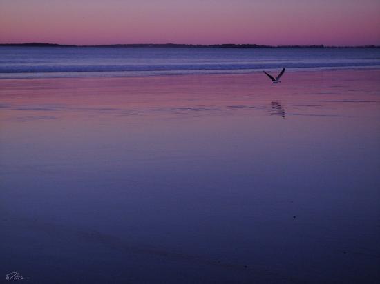 Normandie Oceanfront Motor Inn: Pre - Sunrise Glow
