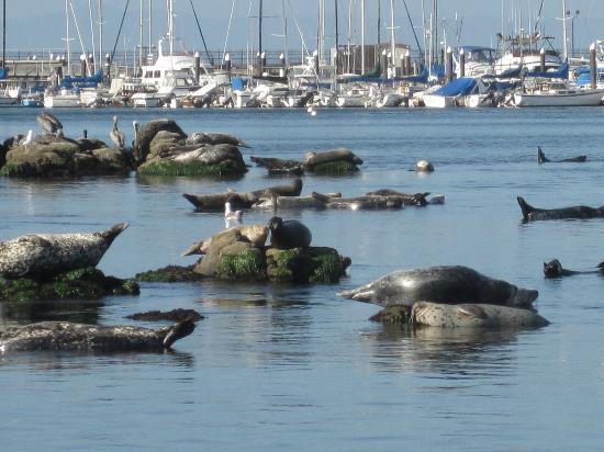 Monterey Hotel: monterey bay