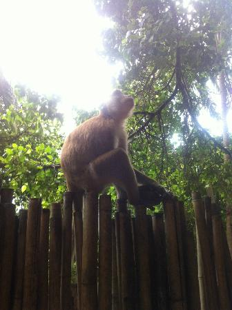 Sand Sea Resort : Monkey on a Fence