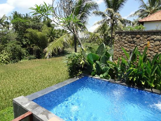 Ubud Green: View of the rice field from the private pool