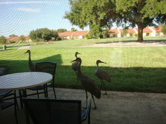 Holiday Inn Club Vacations Orlando - Orange Lake Resort: Patio with Visitors