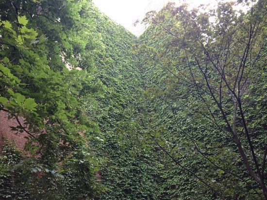Pub Sainte-Elisabeth: Ivy Walls
