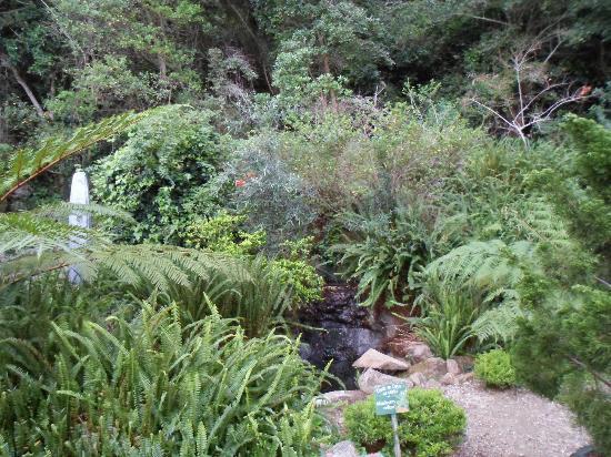 Cloverleigh Guest House: Garden views 