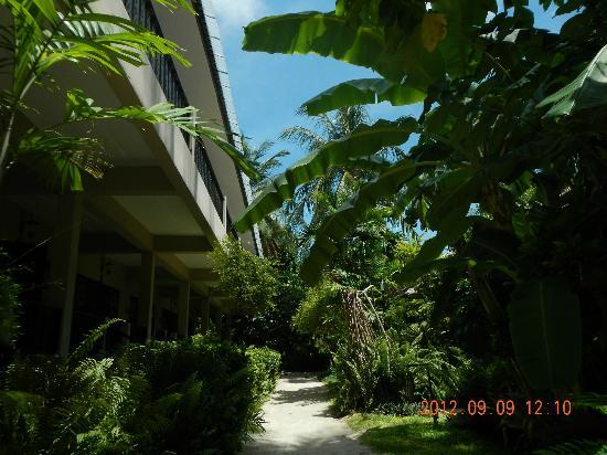 Chaweng Garden Beach Resort: resort pathway