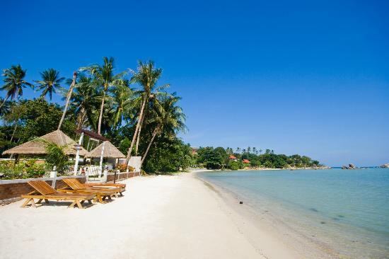 Samui Tonggad Resort : White sand? just be right on the beach