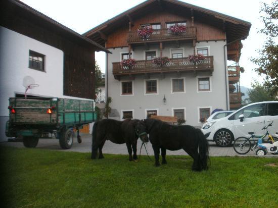 Brixnerhof: appartement met uitzicht vanuit tuin