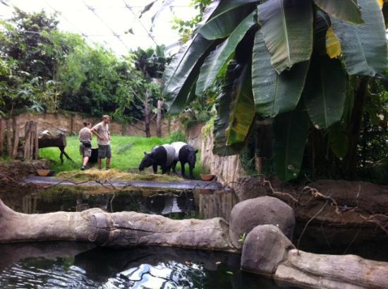 Bootsfahrt in GondwanaLand Picture of Leipzig Zoo Zoologischer