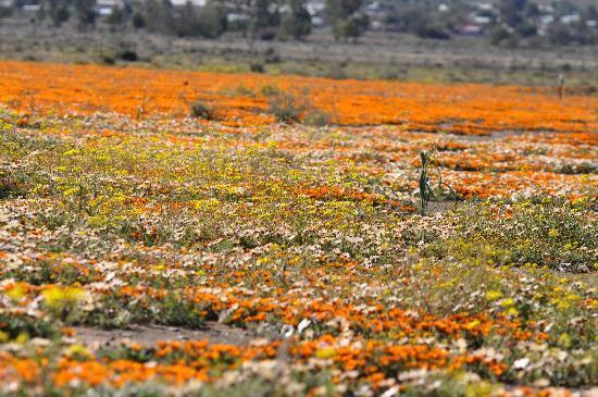 Namaqualand: Spectacular!
