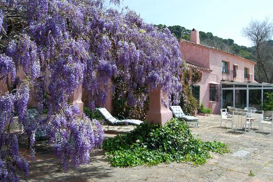 La Almuna Wisteria Pergola And Terrace
