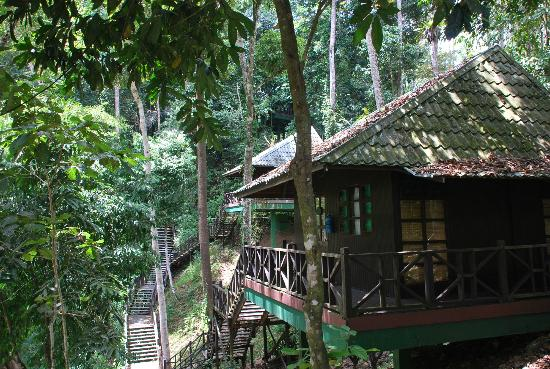 Tabin Wildlife Resort: from our room