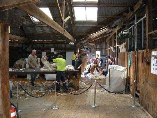 Shear Outback: The whole operation.