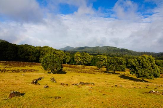 Tarkine Wilderness Lodge: The amazing views from the lodge
