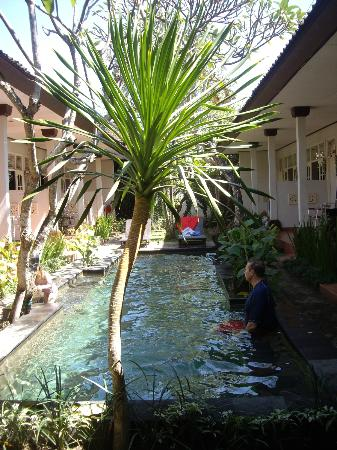 Little Pond Homestay: The pool from the entrance........