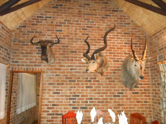 Southern Comfort Lodge: Excellent Mounts!