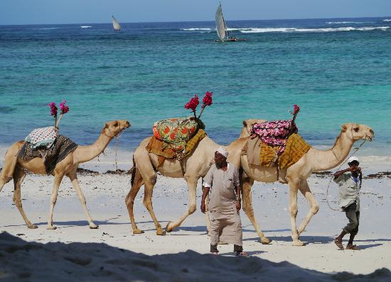 Southern Palms Beach Resort: Camels on the beach
