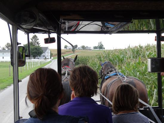 AAA Buggy Rides : Buggy ride