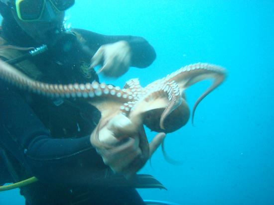 Octopus Diving Center: Theo with Octopus