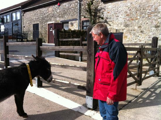 Berwick House: The Donkey - the reason for visitng Sidmouth!